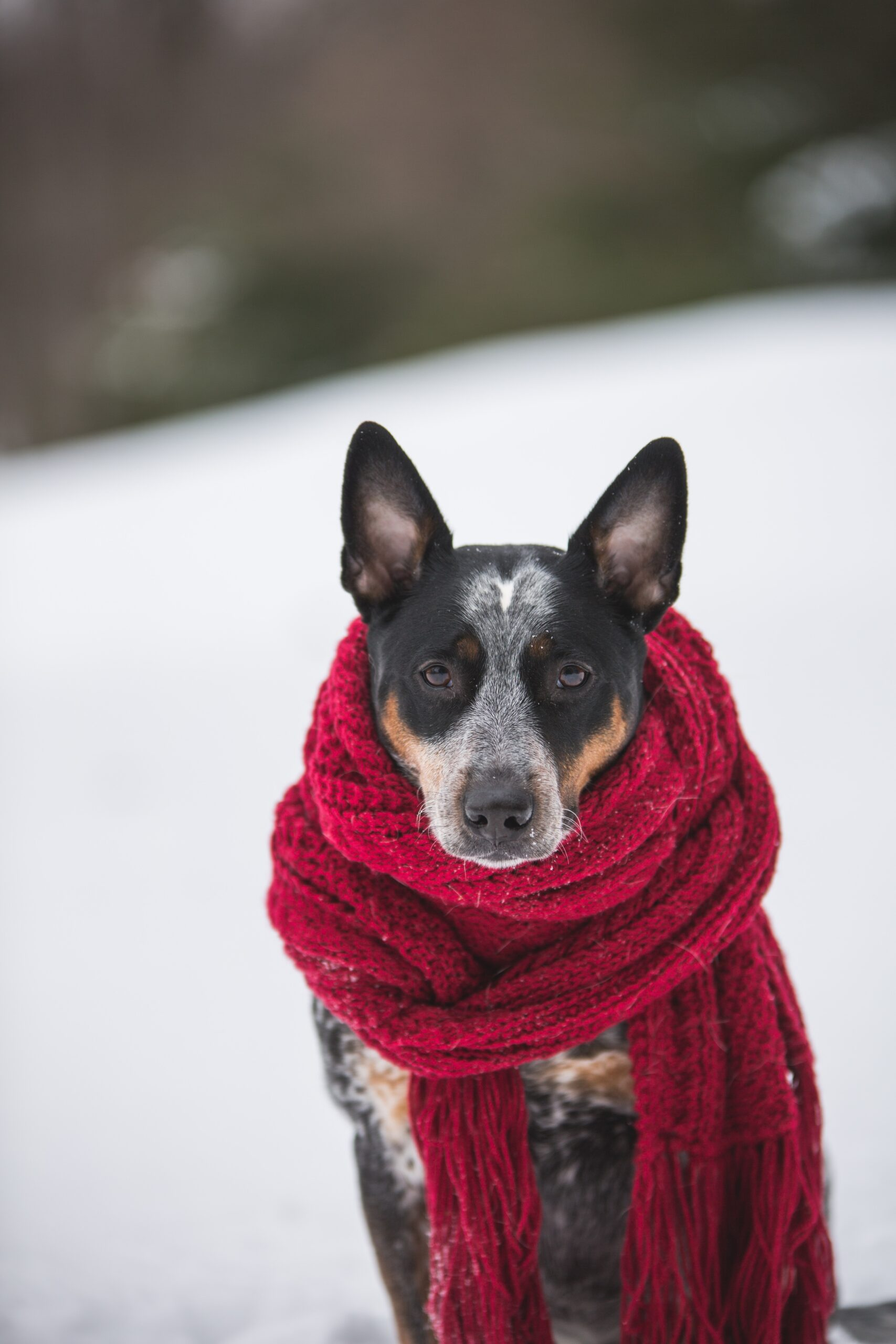 5 Tips to Keep Your Pet Warm This Winter